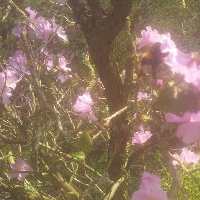 Flower Nature Geijsteren