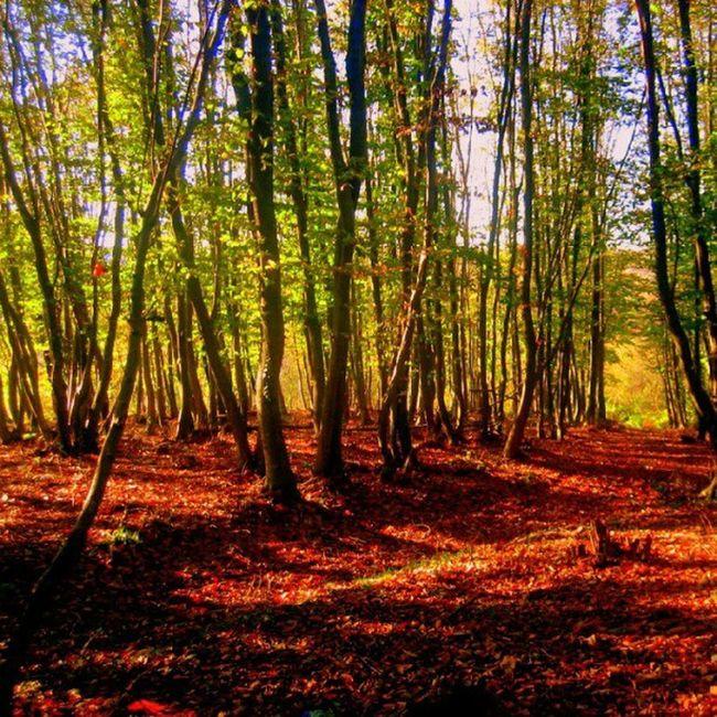 Polonezkoy Adampol Autumn Fall trekking istanbul turkey nature