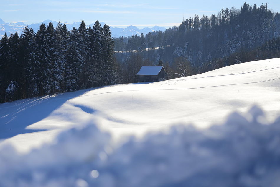 Swiss winterscape. Betterlandscapes Blue Shadow Cold Temperature Enjoying Life Eye4photography  EyeEm Best Shots EyeEm Gallery EyeEm Nature Lover Forest Hiking Hills Hut Idyllic Landscape Light And Shadow Mountain Nature No People Snow Switzerland Tranquility White Color Winter Winterscapes Zürcher Oberland