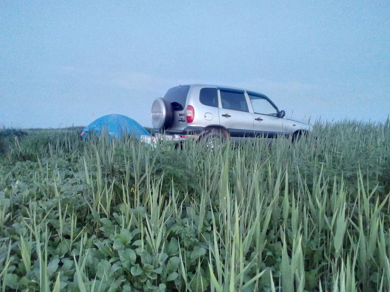 car, field, grass, transportation, growth, day, nature, outdoors, plant, no people, sky, beauty in nature