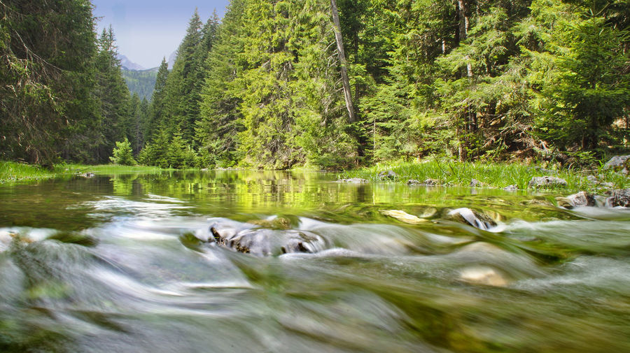 Beauty In Nature Day Durmitor, Montenegro Flowing Forest Green Lake Montenegro Montenegro Wild Beauty Nacionalni Park Durmitor Nature No People Outdoors River Scenics Stream Tranquil Scene Tranquility Tree Water Waterfront