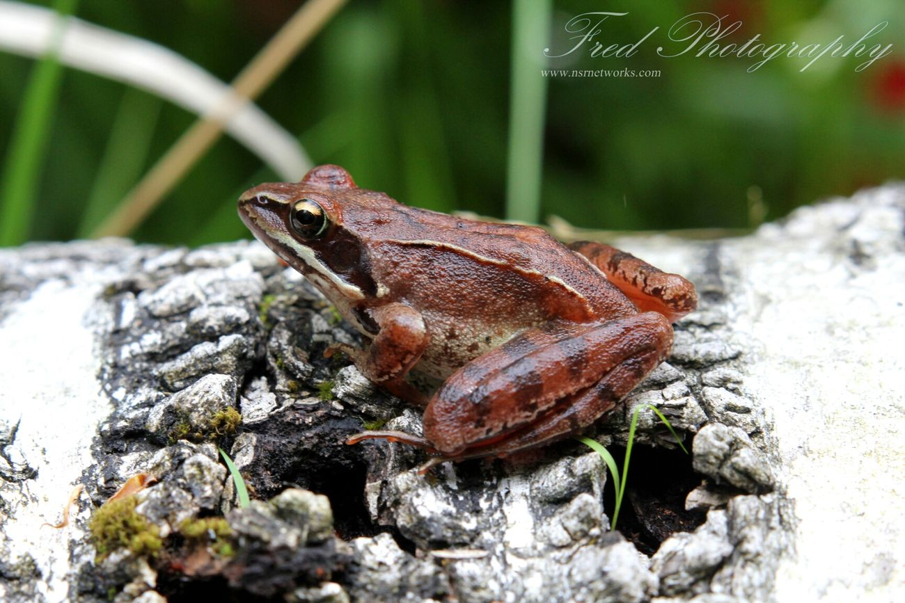 Frogs Frog Grenouille Nature Collection