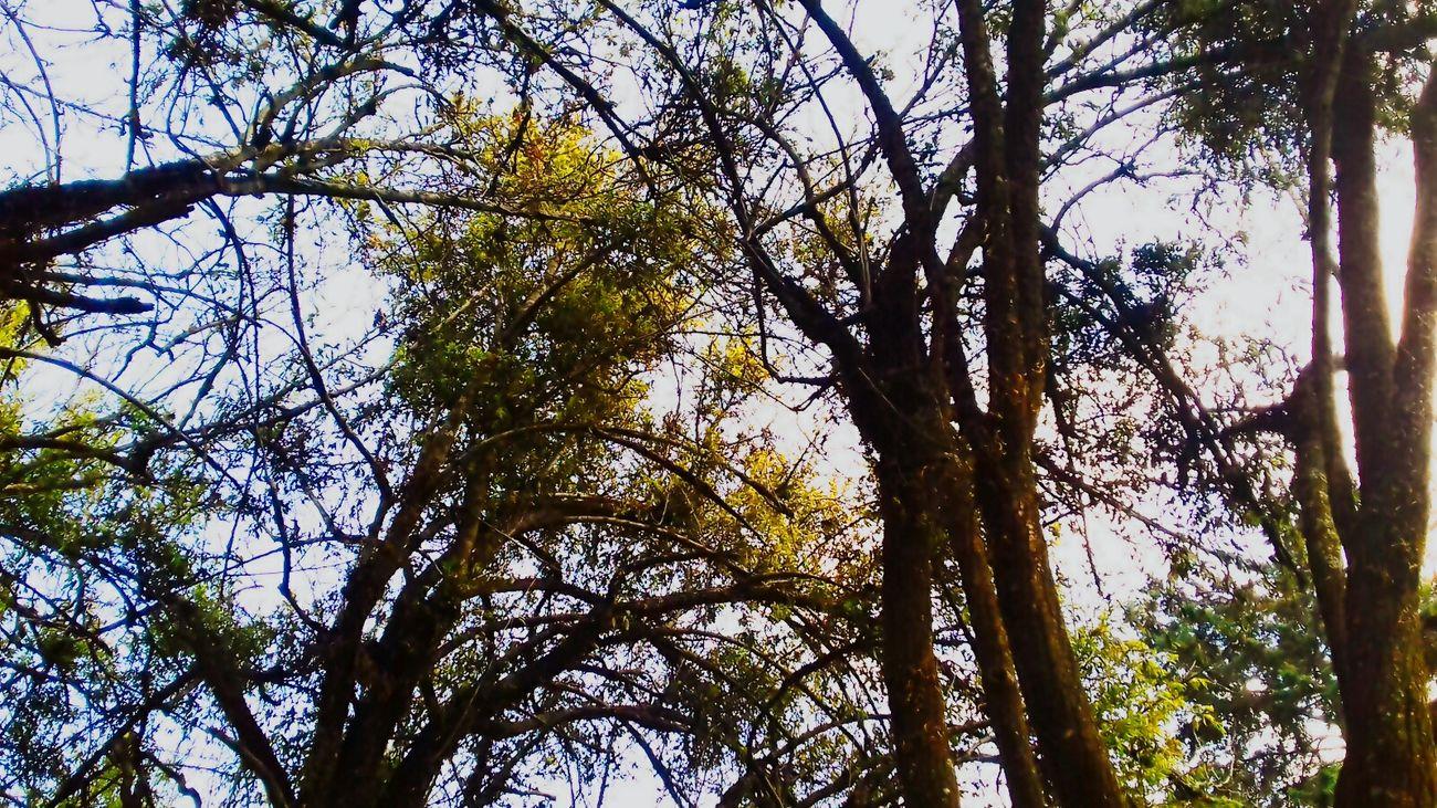Nature Photography Enjoying The Sun Happy Wednesday! EyeEm Best Edits EyeEm Trees México ❤👌 Tree And Sky Sunny Day 🌞