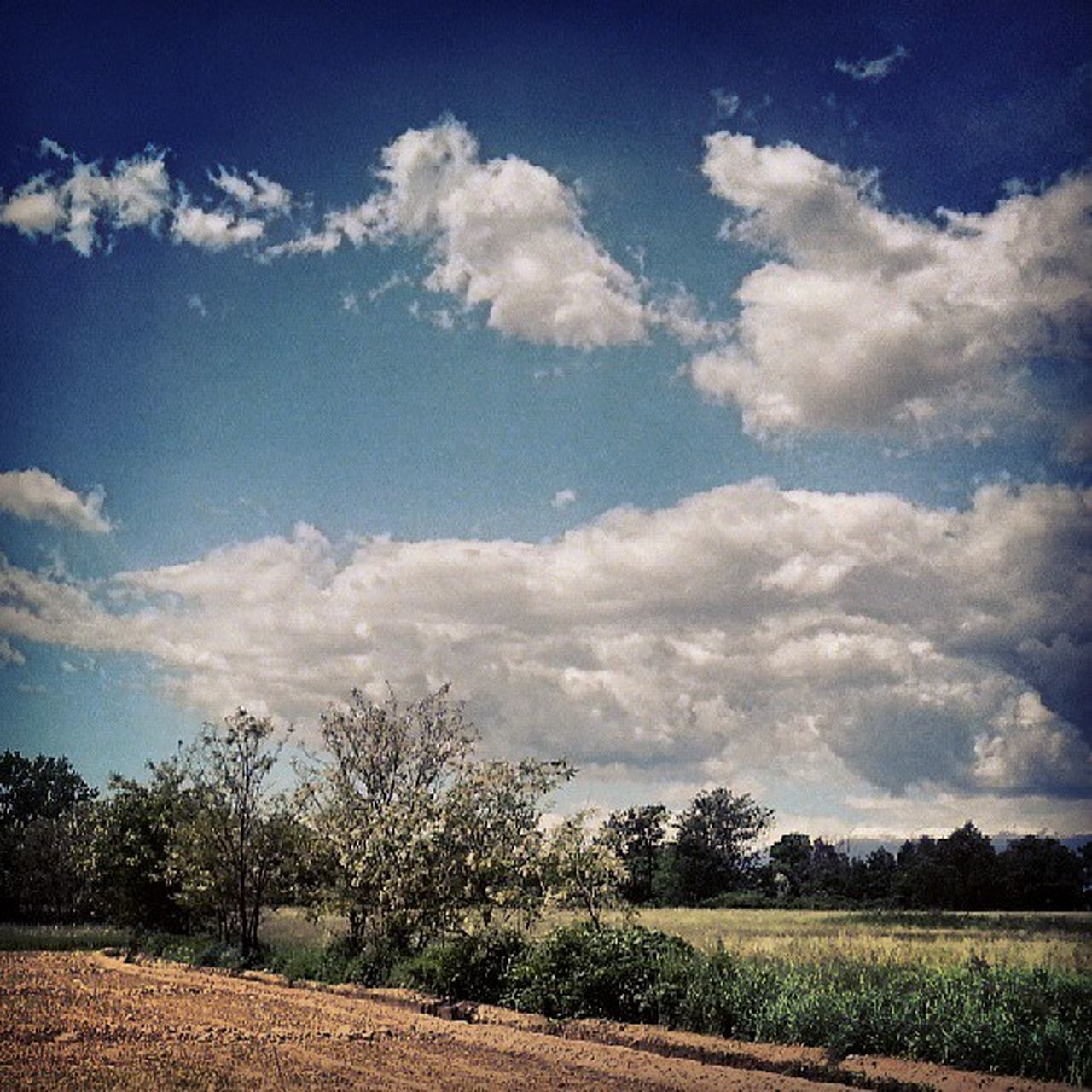 sky, cloud - sky, field, nature, scenics, landscape, beauty in nature, tranquility, tranquil scene, no people, day, tree, outdoors, agriculture, rural scene