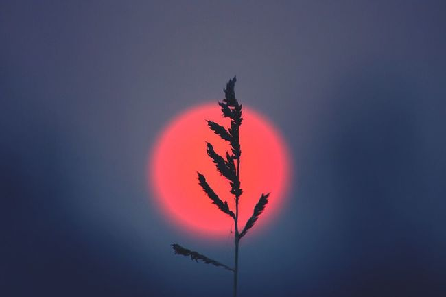 Silhouette flower at sunset Sunset Sun Flower Flowers Nature Nature_collection Open Edit Red