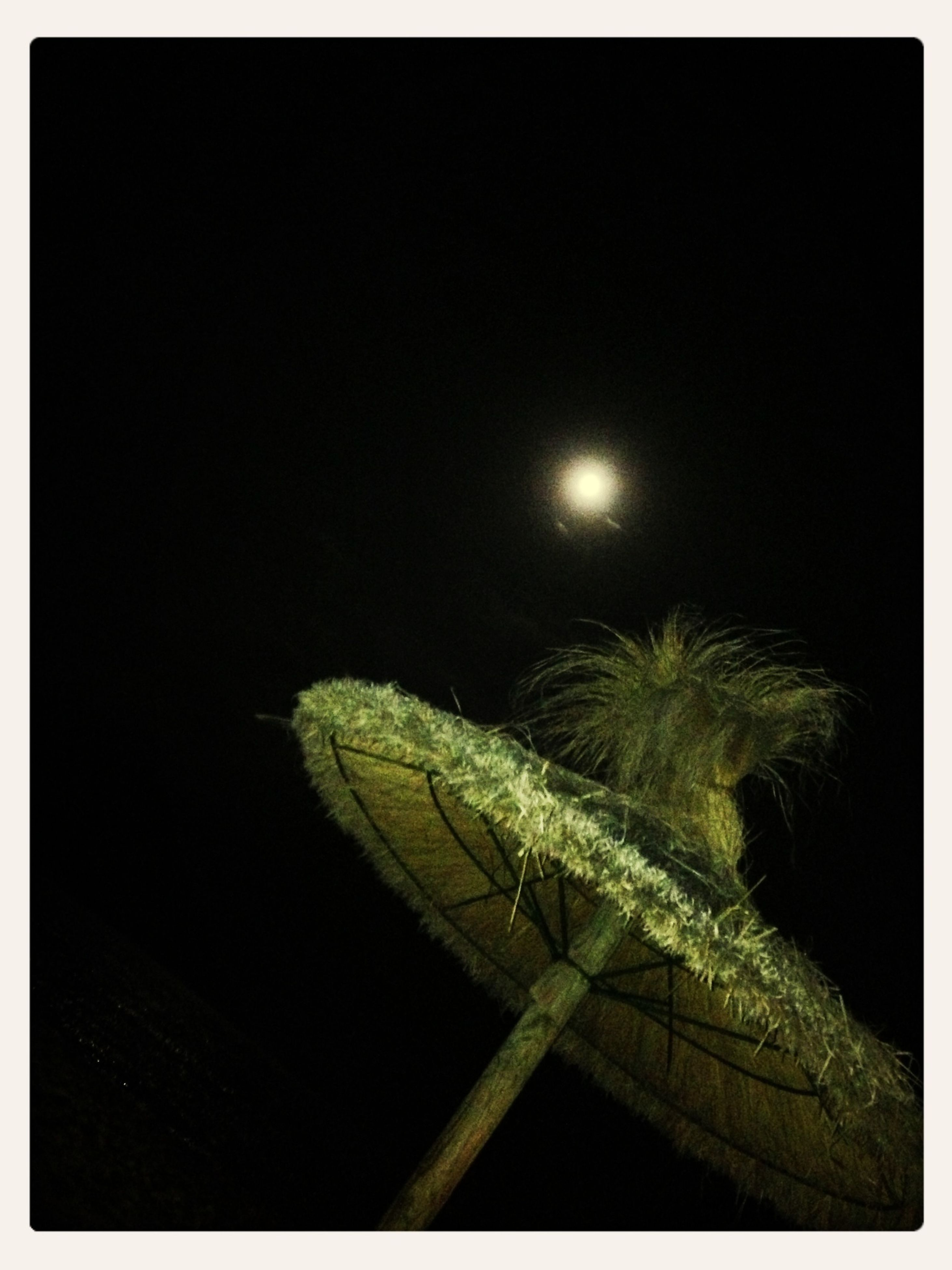 night, transfer print, clear sky, low angle view, auto post production filter, copy space, nature, illuminated, growth, outdoors, no people, beauty in nature, moon, tree, sky, branch, dark, tranquility, close-up, green color