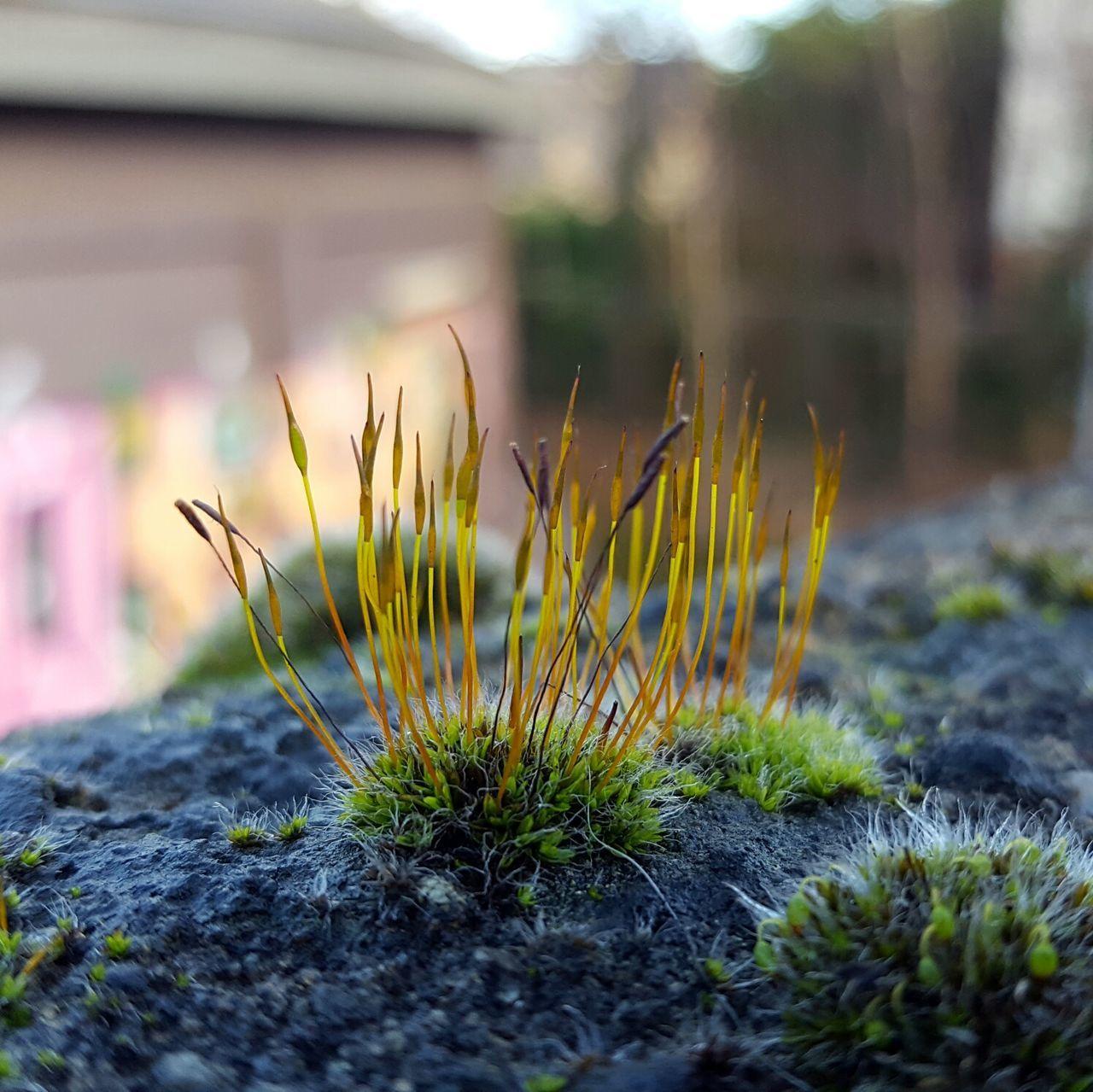 Small World. Macro Macro Photograph Moss Bokeh Close-up