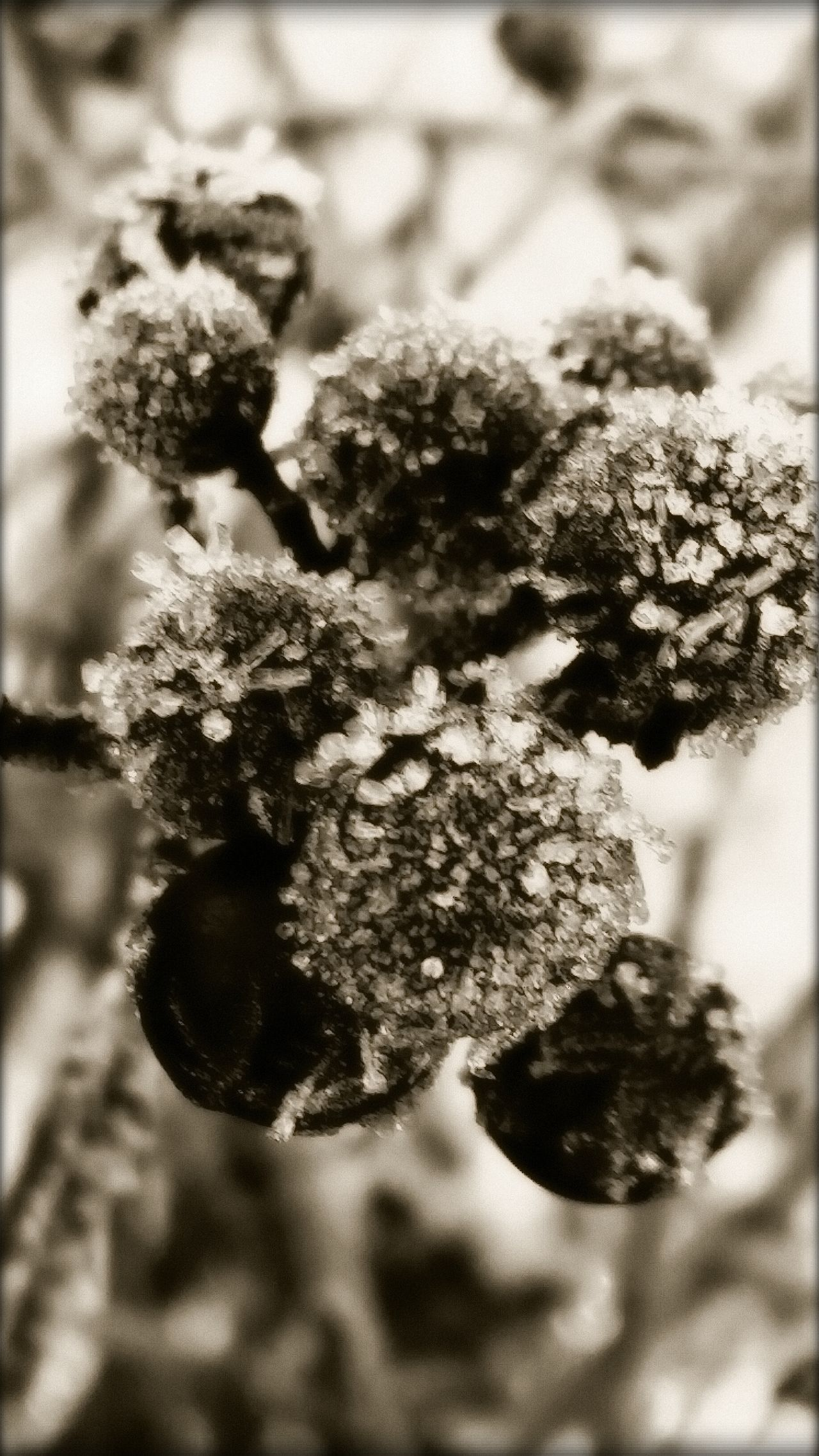 Berrys Frozen Winter Nature Black And White Photography Outdoor Photography No People