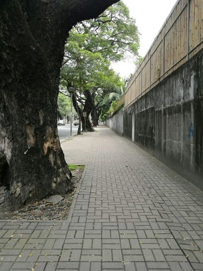Tree Outdoors Day No People Nature Roadtrip Streetphotography Street Photography Philippines Makati City Life Tree Road Adapted To The City The Way Forward Walking Street City