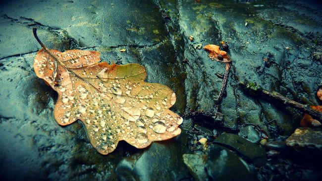 After Rain Autumn Autumn Leaves Beauty In Nature Beauty In Nature Close-up Day Dew Drops Fragility Freshness High Angle View Leaf Nature No People Outdoors Riverbank Riverside Rocks Tranquil Scene Tranquility Water