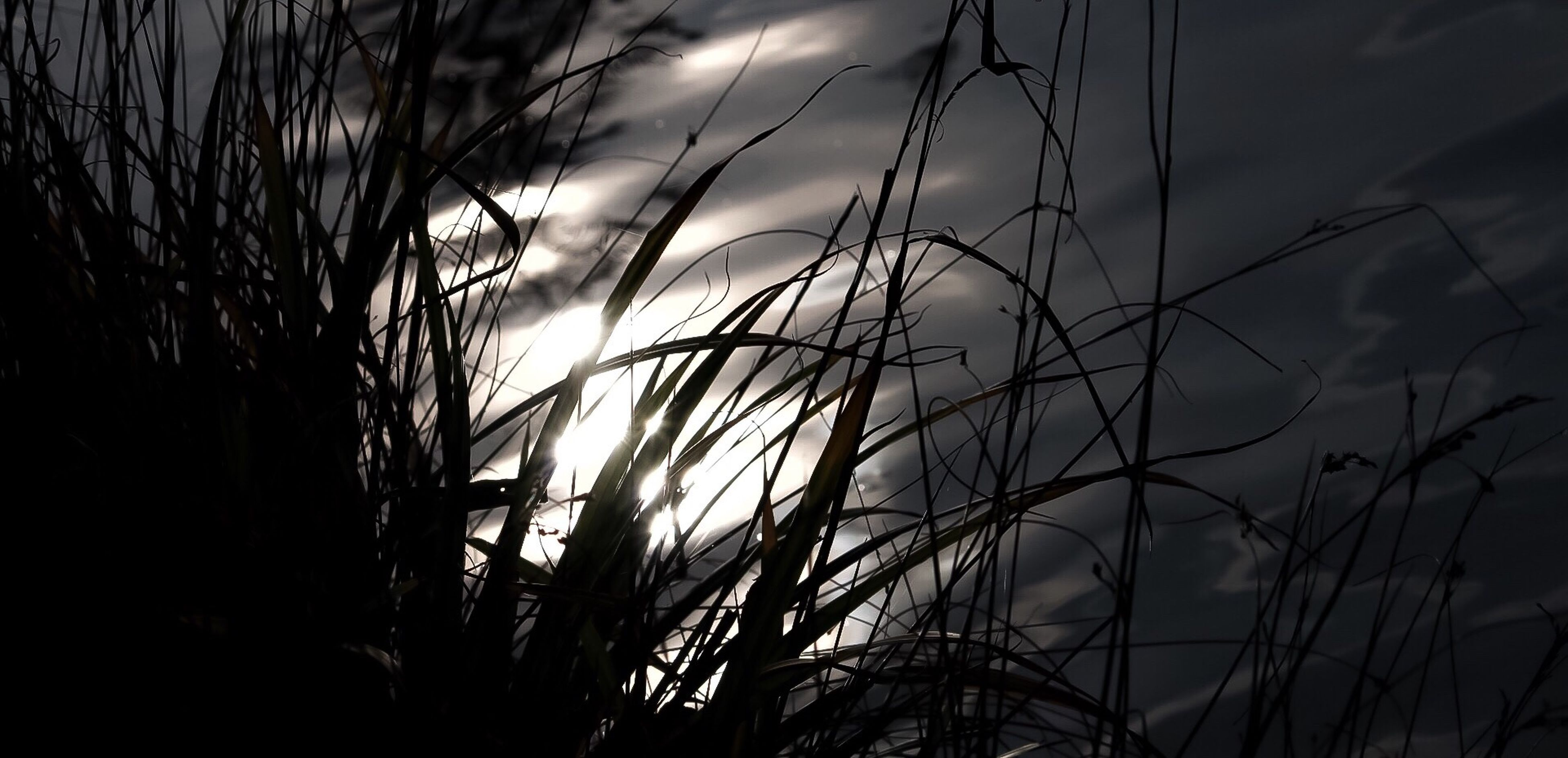 sunset, nature, no people, outdoors, sun, silhouette, sky, close-up, day