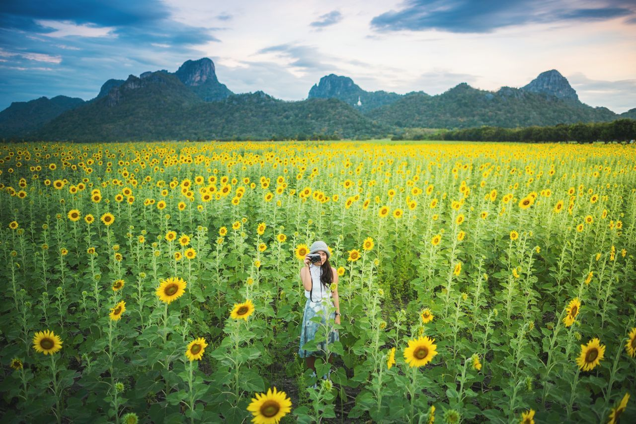 Portrait Of A Friend Blooming Sunflower Sunflowers🌻 Sunflower Field Alldayeveryday  Travel Thailand 2015🎁🎉