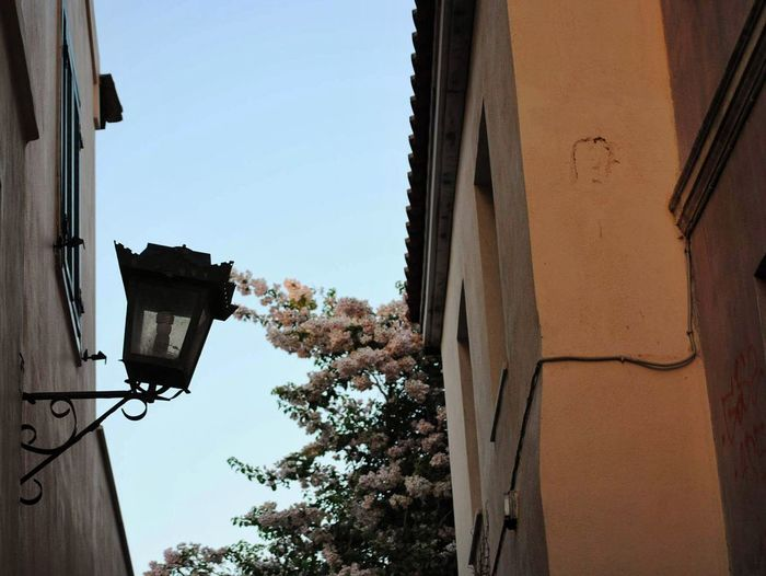 Vintage Outdoor Photography City Roof Plaka, Athens Plaka Houses Athens, Greece Athens Architecture Flowers Flower Porn Flowers In The City Flower Collection Wall - Building Feature