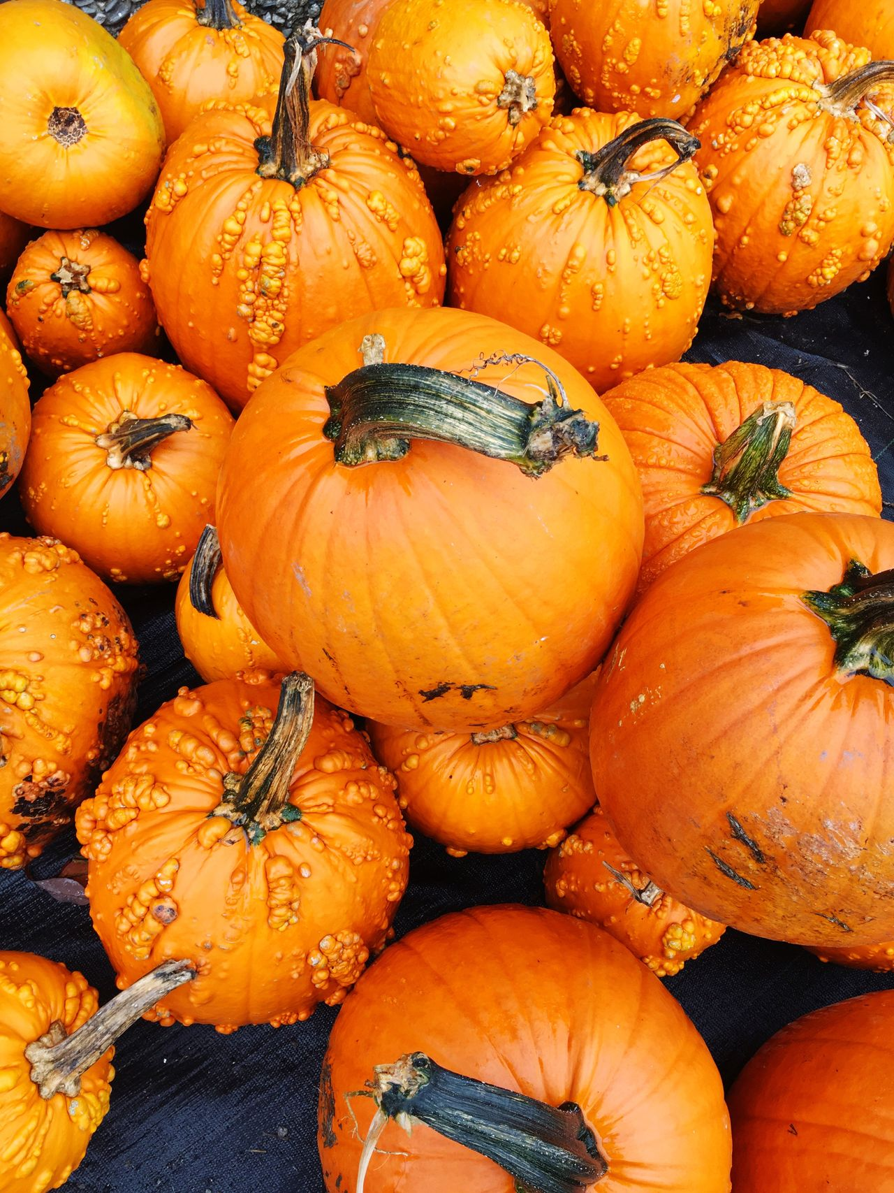 Pumpkins Abundance Food Food And Drink Freshness Healthy Eating Large Group Of Objects Backgrounds Orange Color For Sale Retail  Close-up Healthy Lifestyle Vegetable Consumerism Selling Vibrant Color Overhead View No People Arrangement