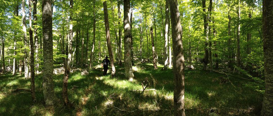 Great experience! National Park Velebit in Croatia ! Travelling EyeEm Nature Lover Share Your Adventure The Traveler - 2015 EyeEm Awards Www.gonetosee.de