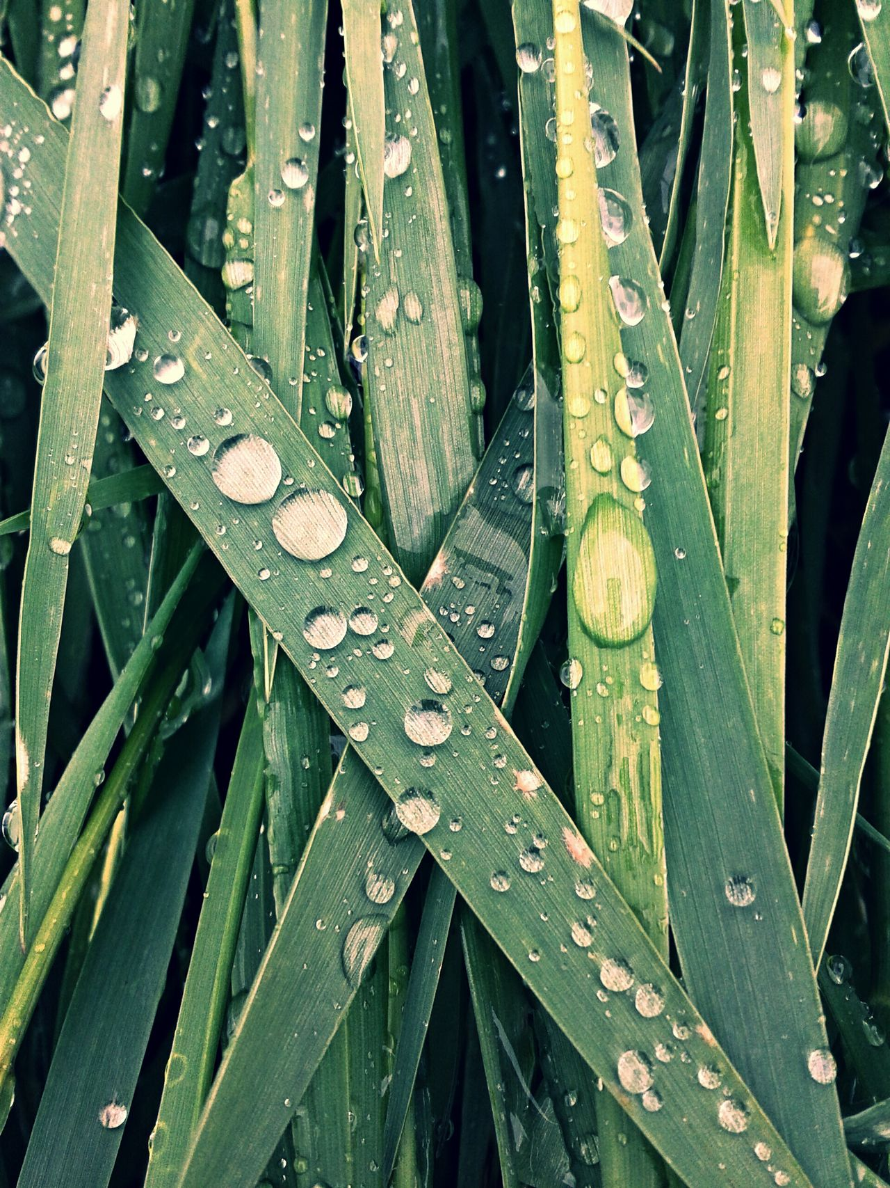 Beautiful stock photos of shower, Backgrounds, Blade Of Grass, Close-Up, Day