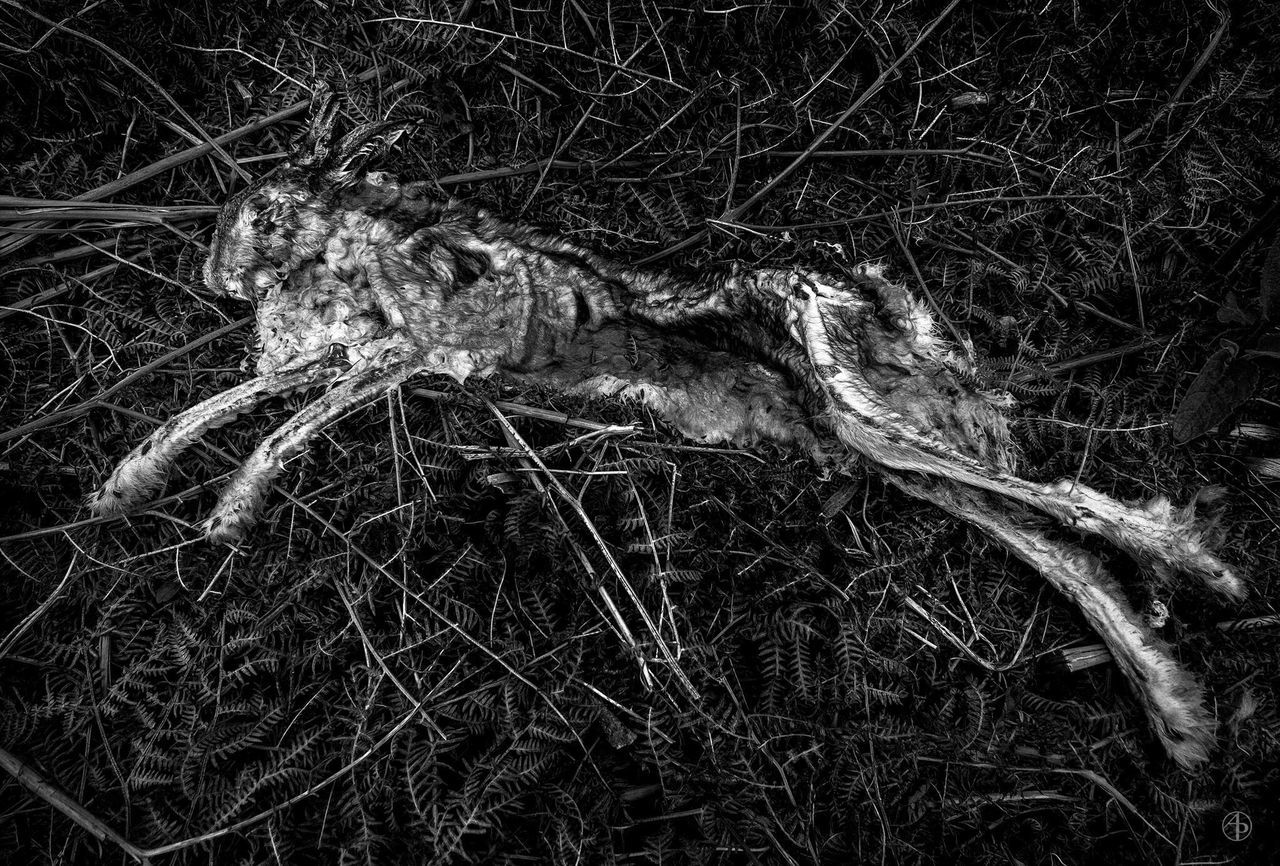 one animal, animals in the wild, animal themes, animal wildlife, no people, night, outdoors, nature, full length, tail, mammal, close-up