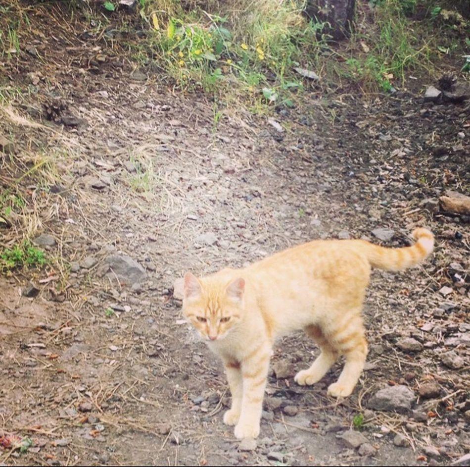 Kedi burcum, kedi ruhumdan gelir...:))