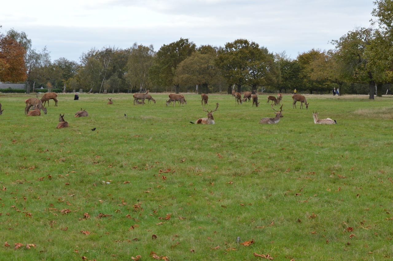 Deers Deers Nature Beauty Peace