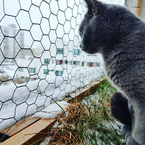 Cat Pets Sky Nature Fence Outdoors One Animal Day