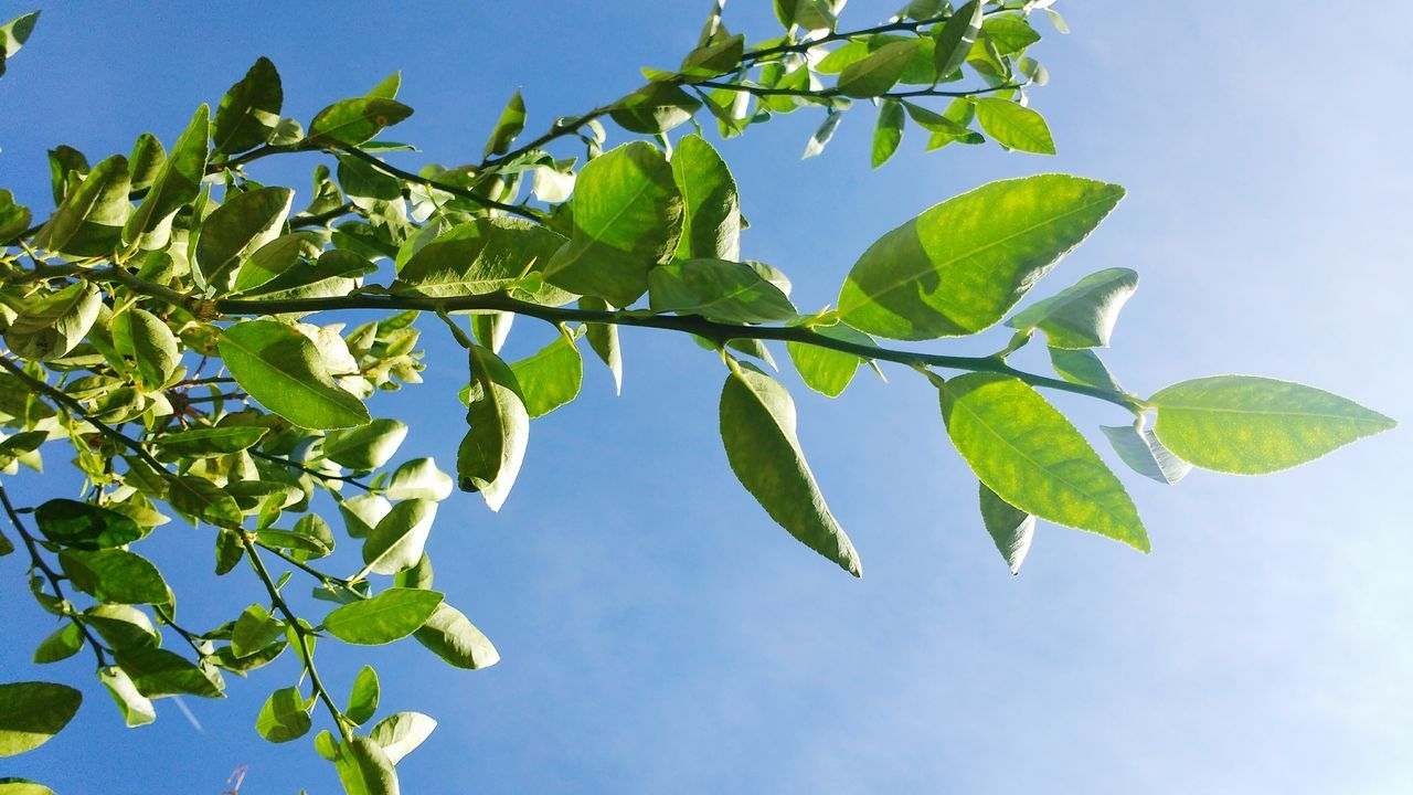 Nature Clear Sky Branch Close-up Tree Sunlight Healthy Eating Plant Blue Growth Leaf Sky Food Agriculture Springtime No People Day Freshness Outdoors Beauty In Nature