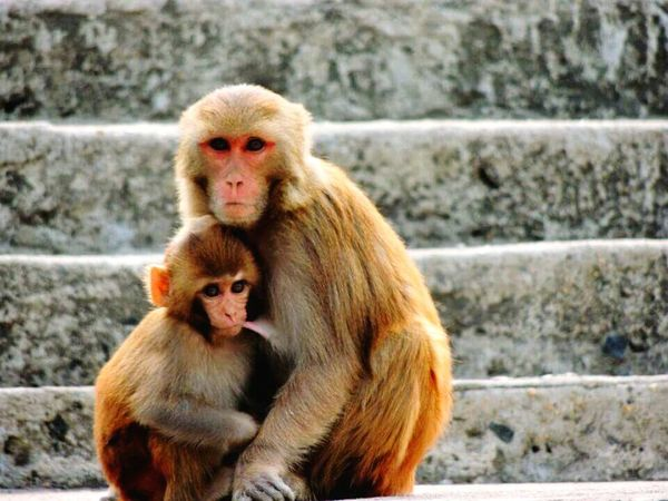 Mother's love is indeed unconditional. Animals In The Wild Animal Themes Animal Wildlife Togetherness EyeEmNewHere
