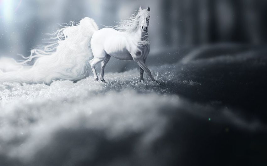 Taking Photos Horse Animal Black & White
