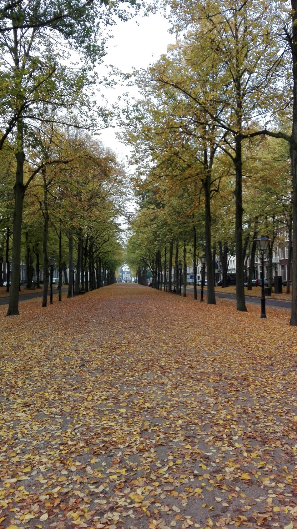 Autumn The Hague Linden Tree Tree Netherlands The Way Forward Day No People Nature