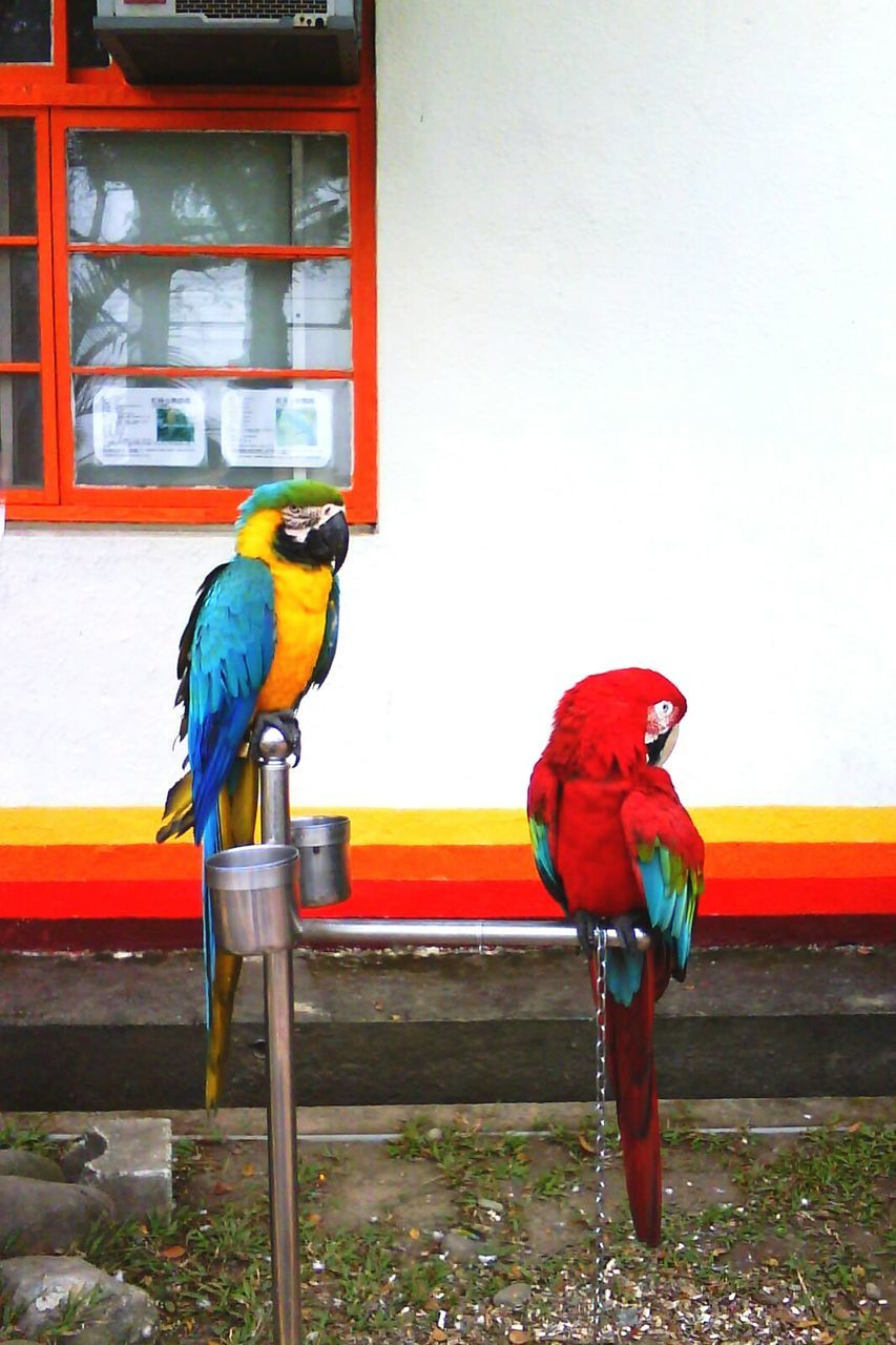 Macaws Perching On Feeder Against Building