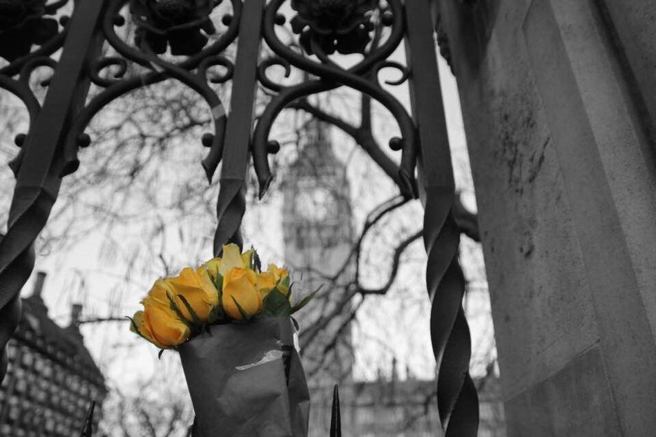 London is not afraid. Flower Outdoors Close-up Nature Westminster LONDON❤ City England 🇬🇧 Terrorism Terrorist Attack Westminster Bridge Westminster Abbey Westminster Abbey, London Westminster, Parliament, London Underground, Tube Starting, Big Ben