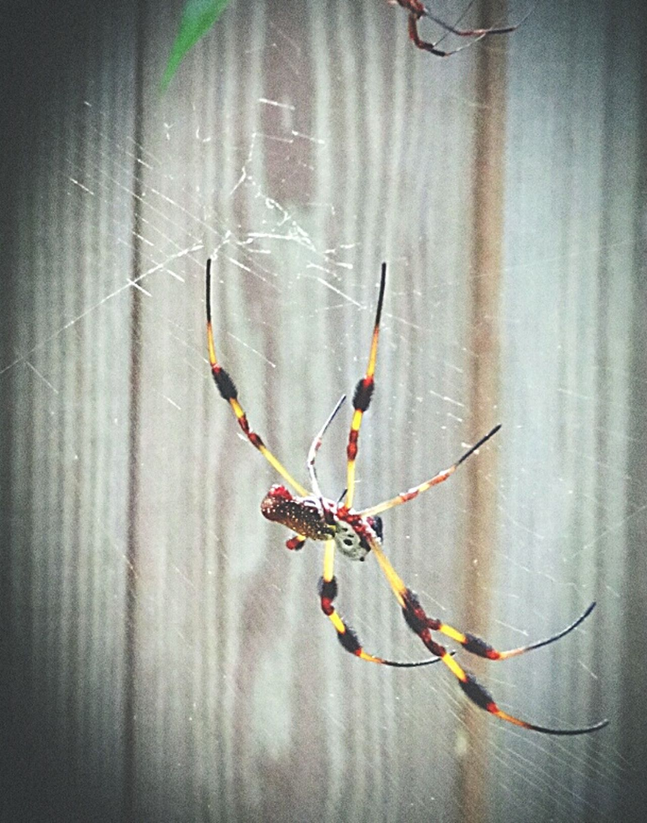 Spider Taking Photos Bugslife Insect Photo Insect Photography Insects  Itsy Bitsy Spider Macro Beauty