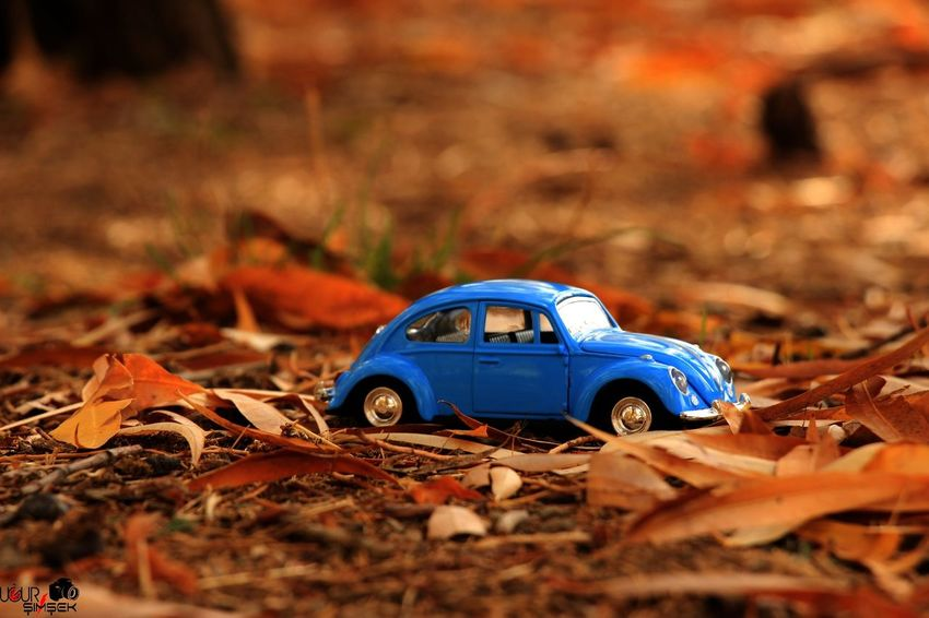 Car Autumn Change Blue Leaf No People Nature Eyesight Day Outdoors Folow Me Photo♡ Ugursimsek Looking At Camera Happiness Doğadan Manzara Doğa Photography Canon