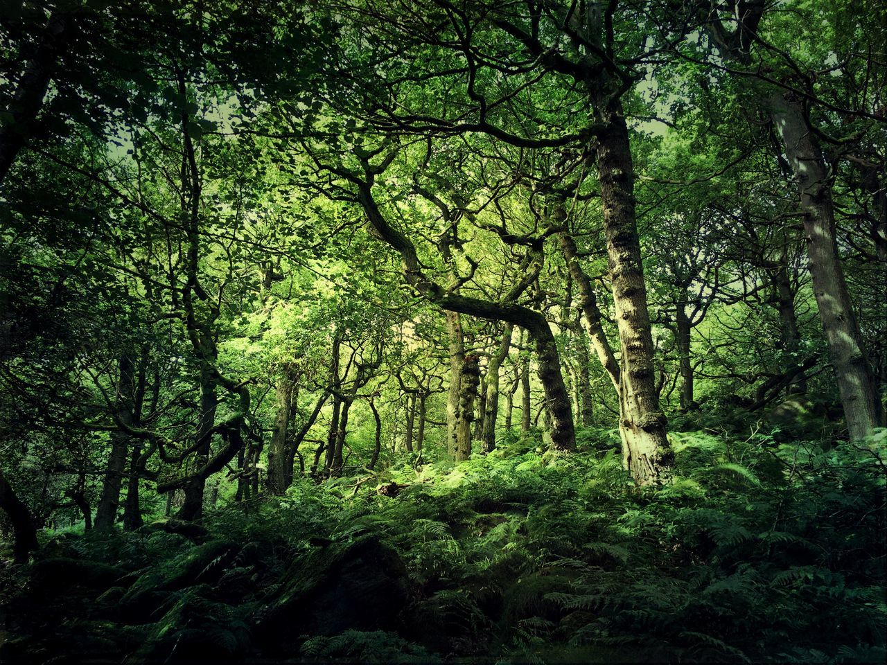 Treemagic Tree_collection  Trees Trees And Nature Treelovers Tree Forest Growth Tranquility WoodLand Tranquil Scene Nature Beauty In Nature Lush Foliage Green Color Nature Eyem Nature Lovers  Nature_collection Tranquility EyeEm Nature Lover Beauty In Nature Eyem Best Edits EyeEm Best Shots EyeEm Best Shots - Nature