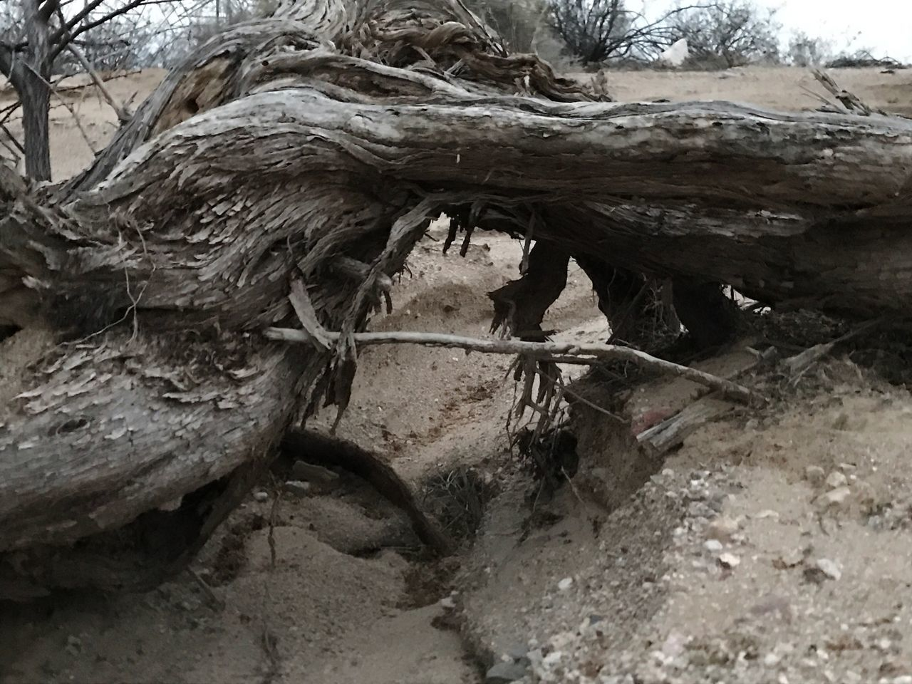 no people, tree, day, nature, outdoors, dead tree, close-up, animal themes