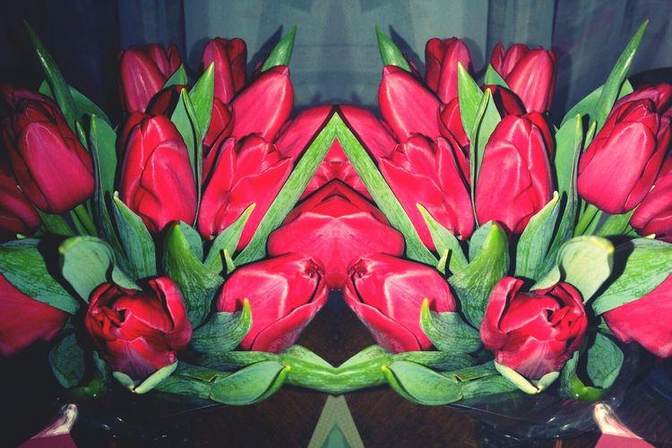 Valentine's Day  ♥