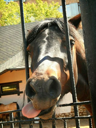Лошадке было очень жарко :))) Russia россия Russian Nature Nature Moscow, Москва природа и красота московскийзоопарк Zoo Animal Hello World Horse