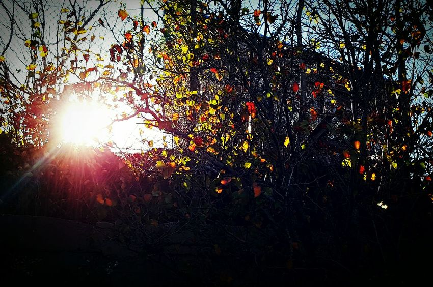 Tree Sun Sunlight Lens Flare Nature Sky Sunbeam Low Angle View Outdoors Day Branch Multi Colored Fence