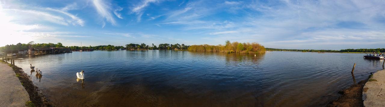 Beautiful stock photos of texas,   Lake Tyler,  Beauty In Nature,  Bird,  Cloud - Sky