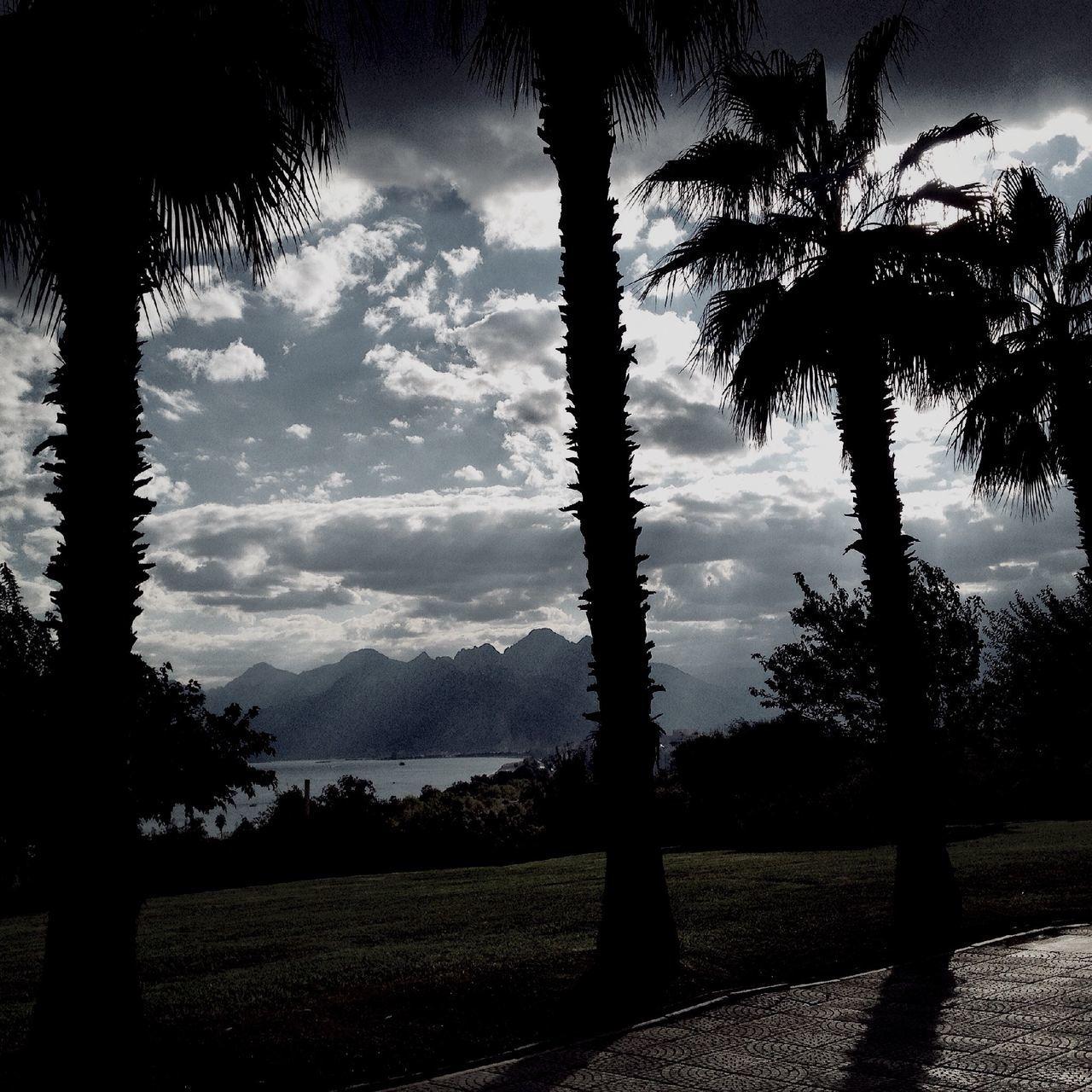 Silhouette Palm Trees On Beach Against Sky