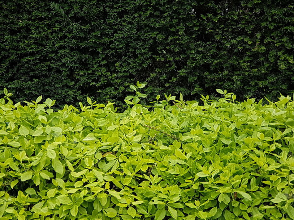 Grass Nature Leaves Green Color Green Leaves Green Wall Nature Wall Green Leaves Backfround Green Leaves. Wall Textures Wall Cover Green Background Garden Photography Garden Garden Wall