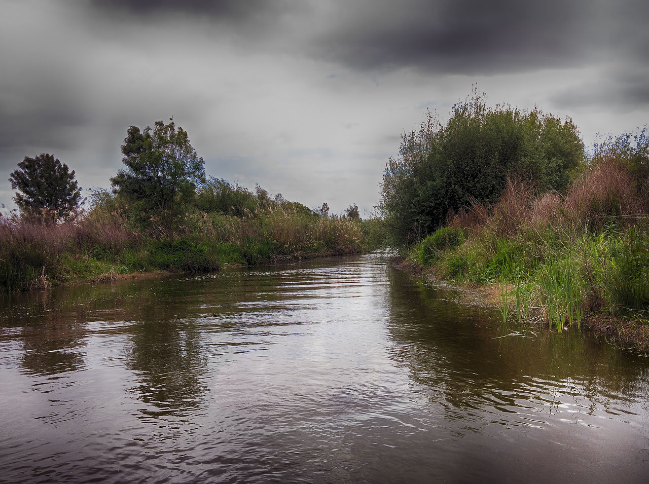 nature, tree, water, tranquility, beauty in nature, tranquil scene, scenics, cloud - sky, outdoors, sky, no people, day, river, growth, landscape, grass