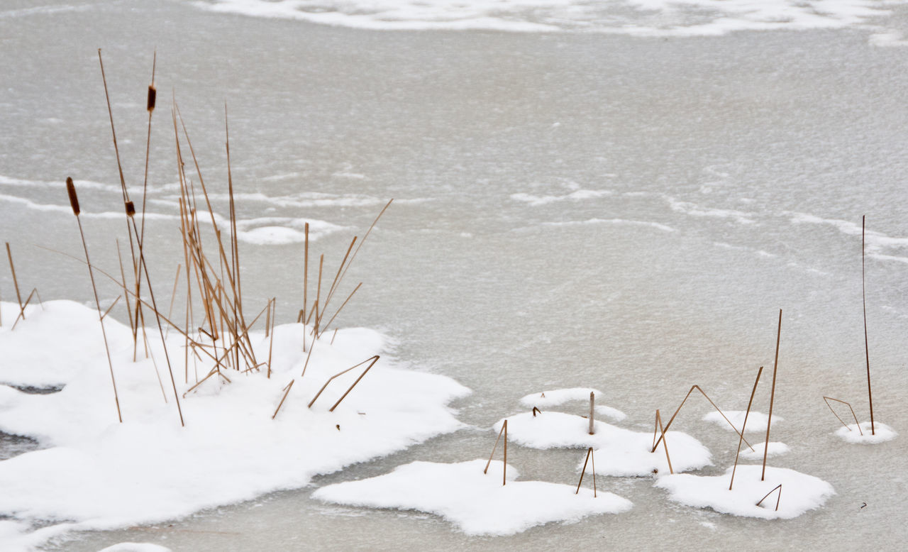 Bullrushes Cold Cold Temperature Day Frozen Frozen Ice It's Cold Outside Lake Nature Outdoors Reeds Rushes Snow Water Weather Winter