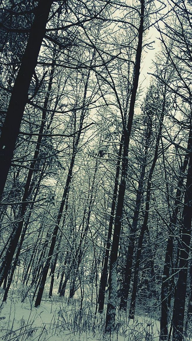 Crazy Nature Snow Is Here Snow Is Cold Nature Beauty Winter Time Winter Day Winter Landscape Winter Walk Wisconsin Life Snow On Trees Wisconsin Winter Winter 2016 Snow ❄ Snow Is Beautiful Nature_perfection Nature Photography Nature_collection Winterscapes Winter_collection Winter Wonderland Winter Woods Woods In The Winter Snow Covered Adventure Club