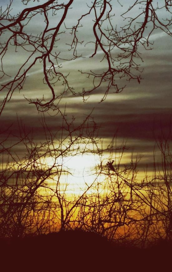 Wildlife & Nature Sun Mystic Darkness And Light 2worlds Sky And Trees