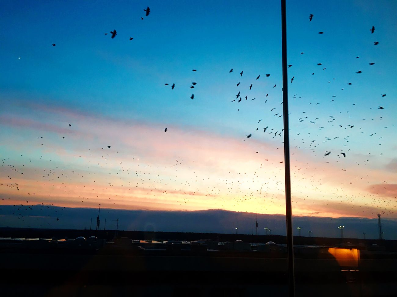 Flying Large Group Of Animals Sunset Flock Of Birds Bird Beauty In Nature Sky Nature Animal Themes Scenics Animals In The Wild Water Silhouette Migrating No People Tranquility Mid-air Tranquil Scene Cloud - Sky Sea Arlanda Airport