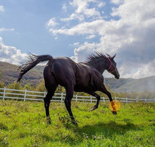 Efsane Adakarası yeniden doğasında G1 Winner Filly Horse Racehorse Morning Selfie Sunrise Nature Equine Equestrian Equestrianlife Stable Sport Filly Colt Forest Green Cloud Clouds Gopro Landscape Cloud Clouds sky