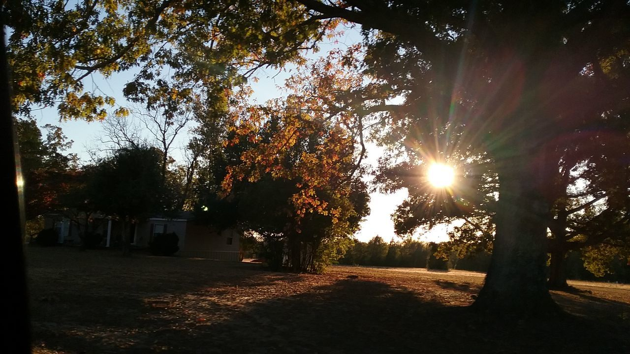 tree, lens flare, sunbeam, sun, sunlight, outdoors, nature, tranquility, no people, beauty in nature, autumn, sky, day