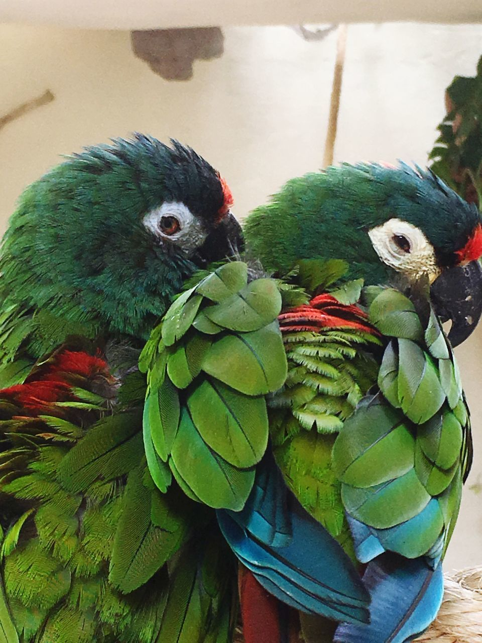 bird, animal themes, parrot, green color, animals in the wild, no people, nature, day, perching, animal wildlife, close-up, indoors, rainbow lorikeet, beauty in nature, macaw