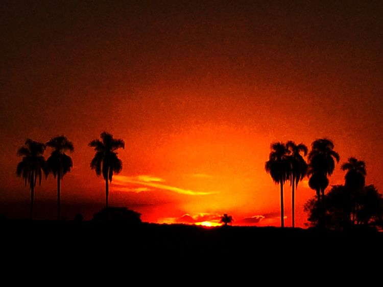 Avare SP BRASIL 🇧🇷☀️ Avare Now® EyeEm Team Sunlight Sunset EyeEm Sunset_collection Sunset Silhouettes Taking Photos Avare Heaven Farm Farm Life EyeEm The Best Shots Sunset #sun #clouds #skylovers #sky #nature #beautifulinnature #naturalbeauty #photography #landscape