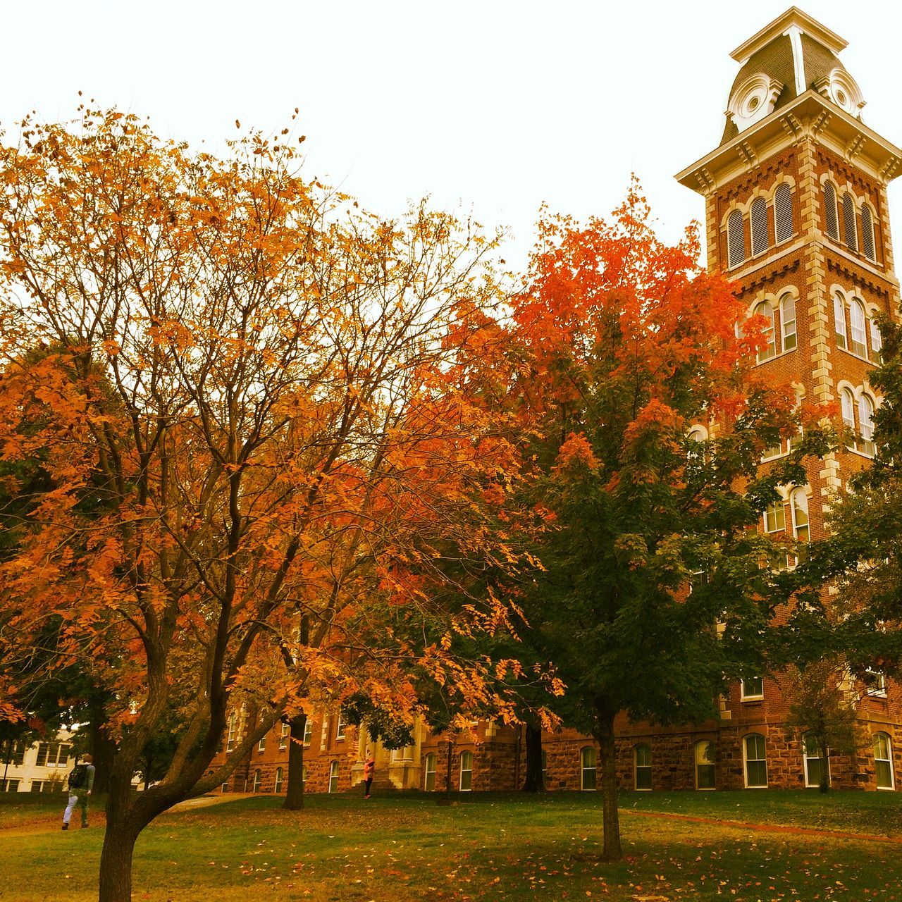 autumn, tree, change, architecture, building exterior, built structure, leaf, no people, outdoors, nature, day, beauty in nature, sky